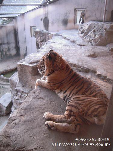 王子動物園をお散歩_b0024758_23582537.jpg