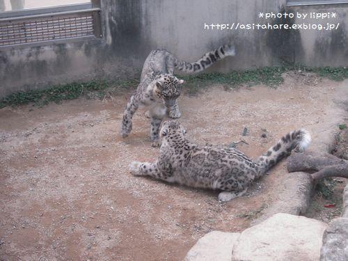 王子動物園をお散歩_b0024758_23591180.jpg