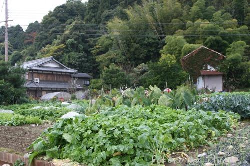 滋賀県沖島_b0153363_1831471.jpg