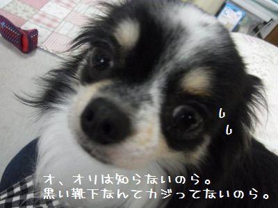 e0059267_2462761.jpg