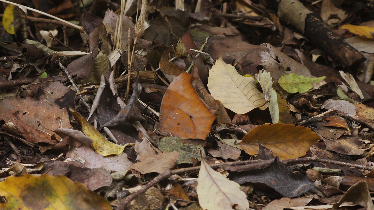 紅葉とカワセミ撮りたい!_f0215767_18483337.jpg