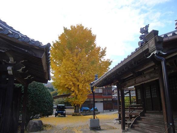 円照寺のイチョウ、見事なり_e0175370_221050.jpg
