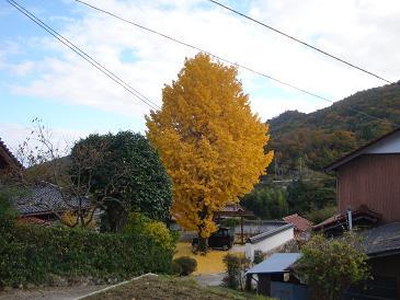 円照寺のイチョウ、見事なり_e0175370_2213479.jpg