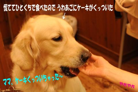 d0043478_1749572.jpg
