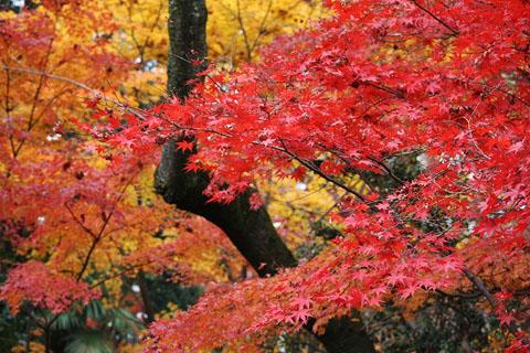 平林寺の紅葉_f0030085_20491577.jpg