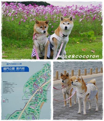 徳島競技会_a0053987_1516699.jpg