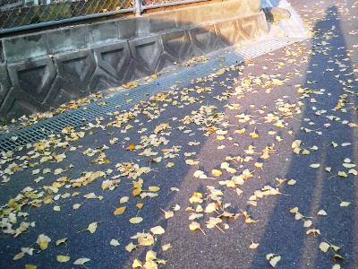 丈高き銀杏の並木、朝夕に何思うらん・・・。_e0188087_2293286.jpg