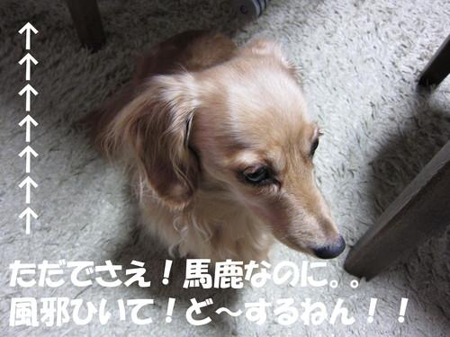 b0200291_18343138.jpg
