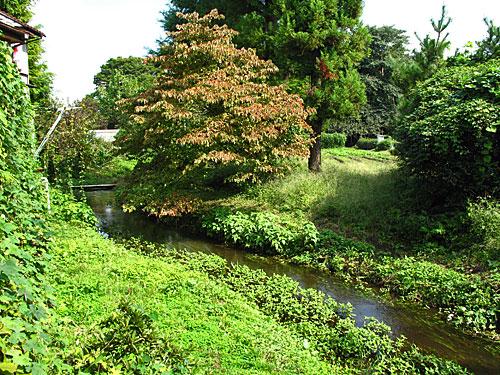 落合川を辿る(6)立野川をさかのぼる_c0163001_23521383.jpg