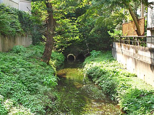落合川を辿る(6)立野川をさかのぼる_c0163001_2352991.jpg