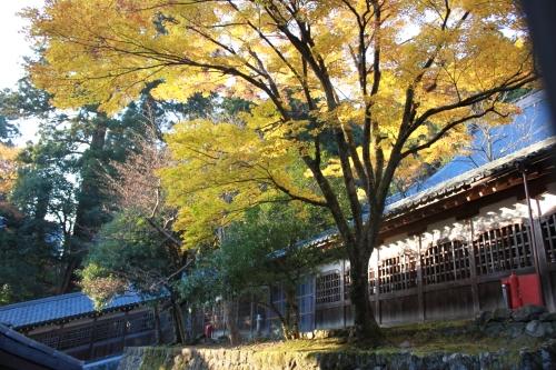 晩秋と初冬の大本山永平寺_f0229508_16105472.jpg