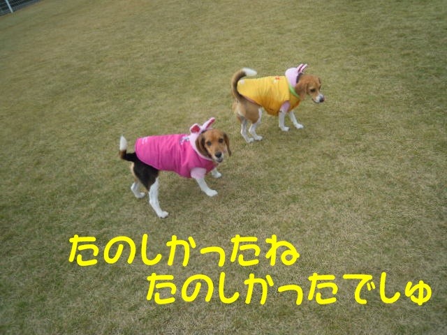 c0166622_13101964.jpg