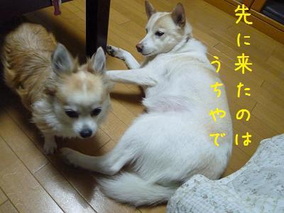 b0138430_2102548.jpg