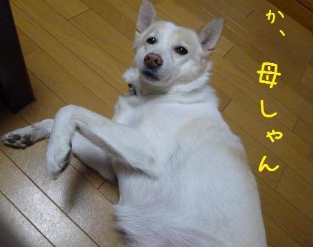 b0138430_214114.jpg