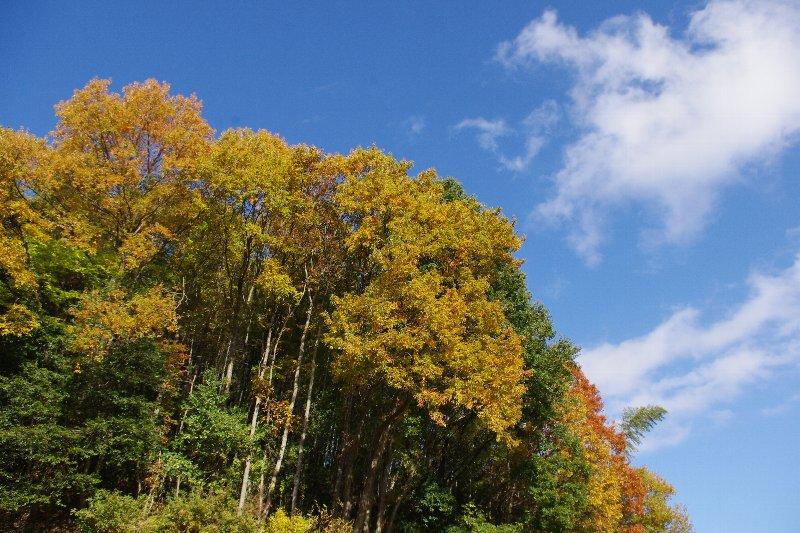 交野山へ_c0113733_15321.jpg