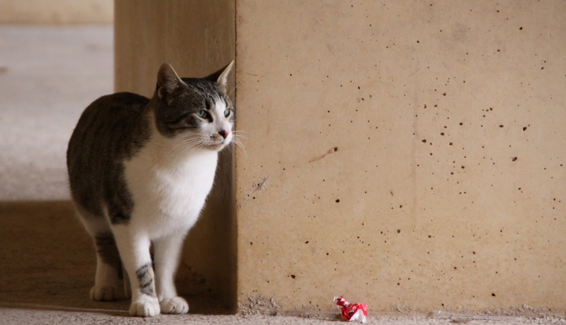 スペインの猫たち・その1_d0167436_0535197.jpg