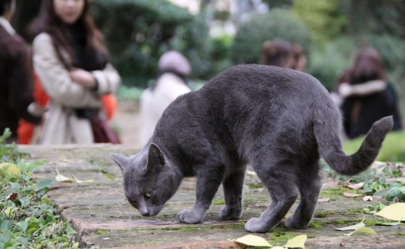 スペインの猫たち・その1_d0167436_0535496.jpg
