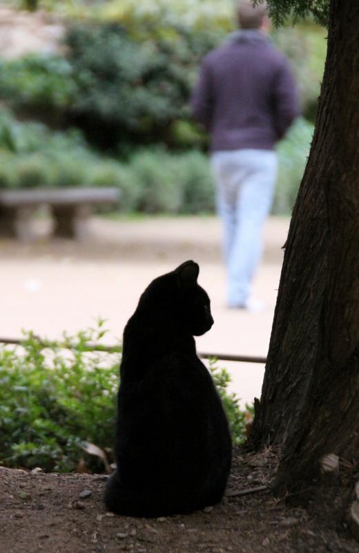 スペインの猫たち・その1_d0167436_0535682.jpg