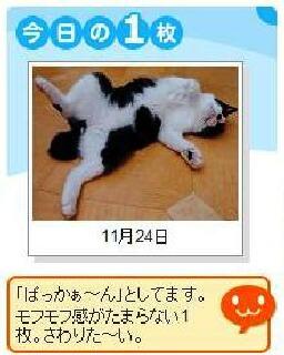 Yahoo!ペット今日の1枚猫 空編。 _a0143140_14313369.jpg