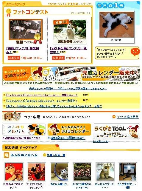Yahoo!ペット今日の1枚猫 空編。 _a0143140_14334587.jpg
