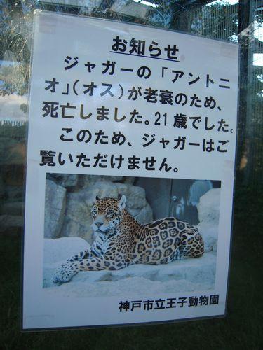 王子動物園をお散歩_b0024758_005717.jpg