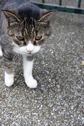 横浜山手の猫 と 「第2回 猫・ねこ写真展」_f0117059_166391.jpg