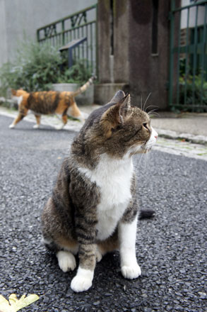 横浜山手の猫 と 「第2回 猫・ねこ写真展」_f0117059_1665836.jpg