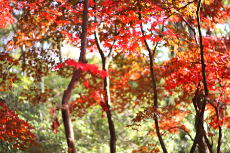 秋の終わり_b0156360_2150321.jpg