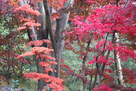 秋の終わり_b0156360_2152495.jpg
