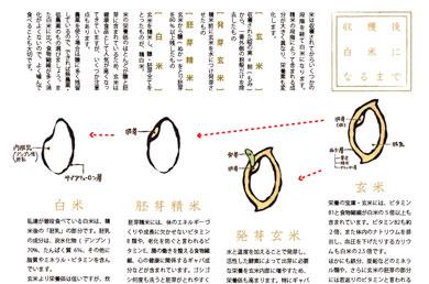 お仕事/アクアタイムズ-2010-秋/他_e0191062_10383653.jpg