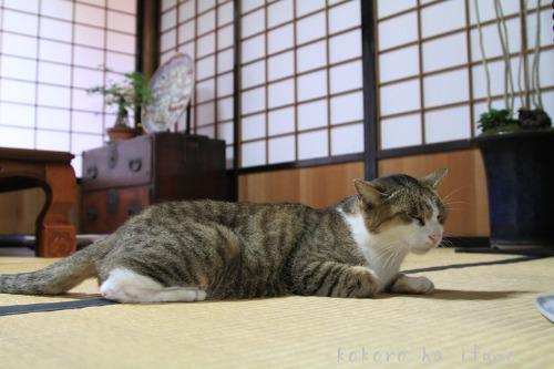 新発田・ねこカフェ_b0153363_23432147.jpg
