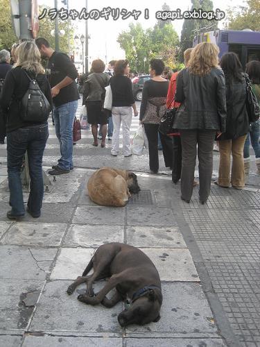 雑踏の中で眠るノラオが2匹!_f0037264_22501035.jpg