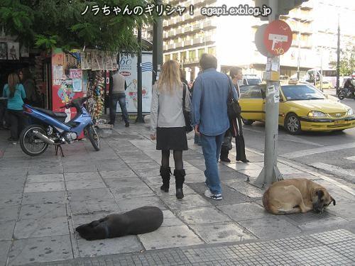 雑踏の中で眠るノラオが2匹!_f0037264_22504037.jpg