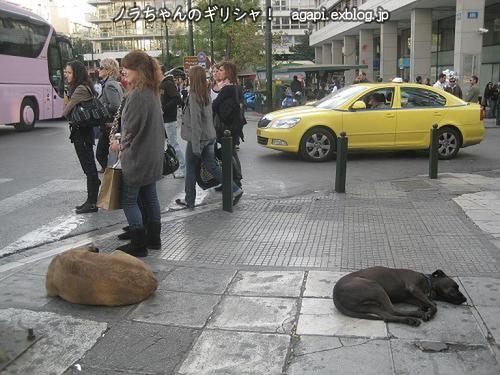 雑踏の中で眠るノラオが2匹!_f0037264_2251237.jpg