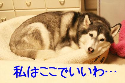 c0161772_20144926.jpg
