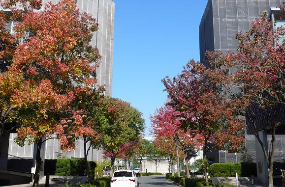 秋っていいですね_c0116778_15204431.jpg