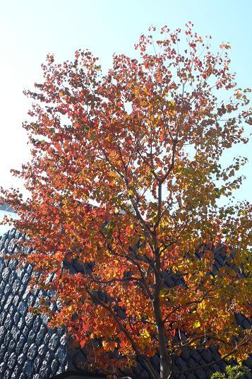 秋っていいですね_c0116778_15223676.jpg