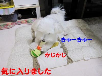 b0193480_1663084.jpg