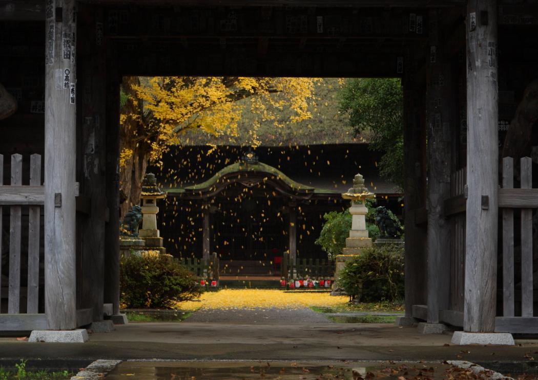 佐竹寺とイチョウ 常陸太田市 2010年11月23日 撮影_e0143883_1832730.jpg