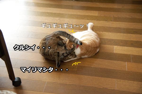 b0141397_1012269.jpg
