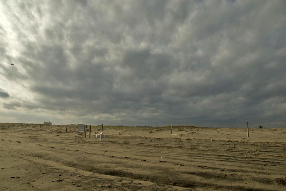 今日の海岸。_c0127403_17335139.jpg