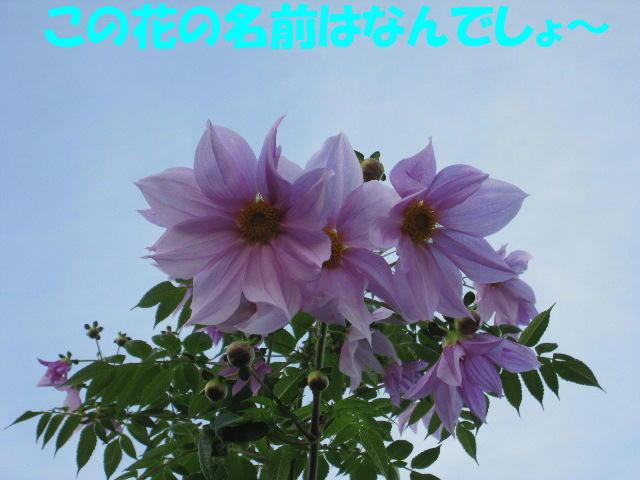 d0081210_1722358.jpg