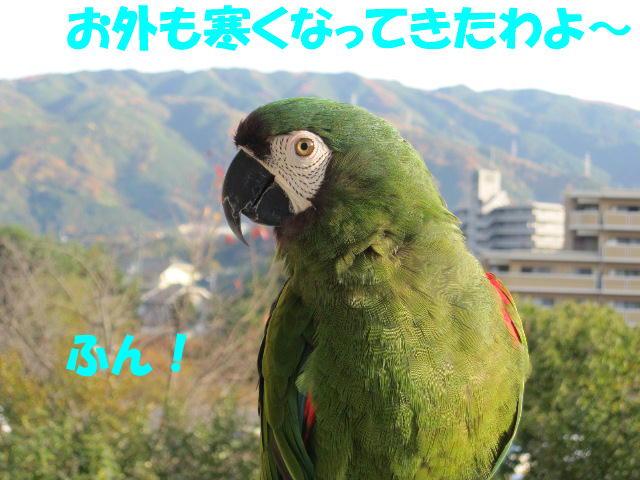 d0081210_17303436.jpg