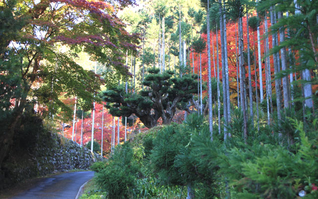 宗蓮寺の紅葉_e0048413_22462436.jpg