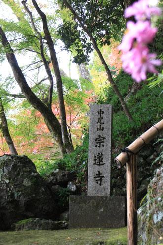 宗蓮寺の紅葉_e0048413_22463980.jpg