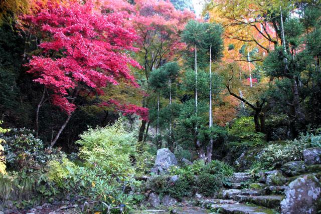 宗蓮寺の紅葉_e0048413_22465520.jpg