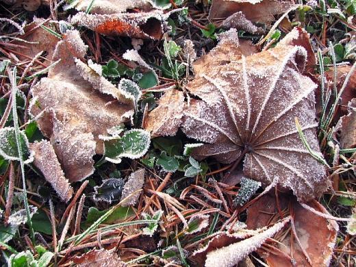 2010年11月25日(木):今朝、道内最寒だった中標津空港_e0062415_18353145.jpg