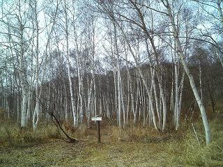 雪待ち_f0032130_1848547.jpg