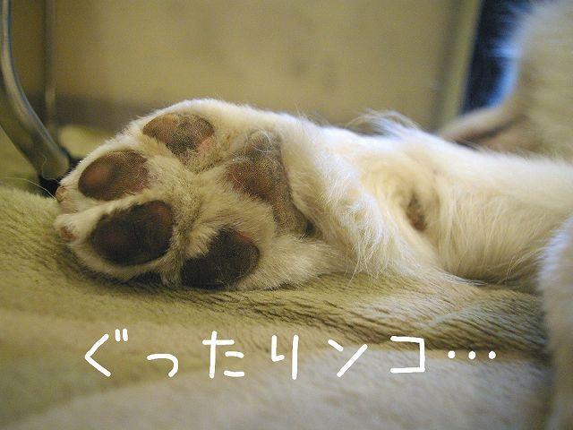 サモエド・マジックショー_c0062832_1623581.jpg