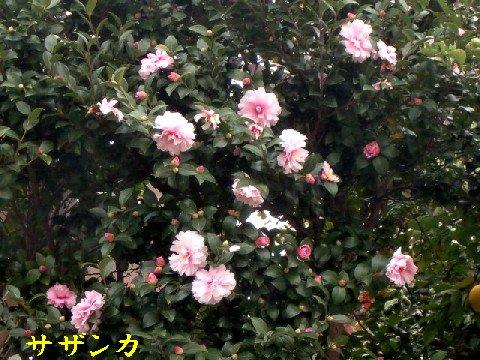 b0012636_1414737.jpg